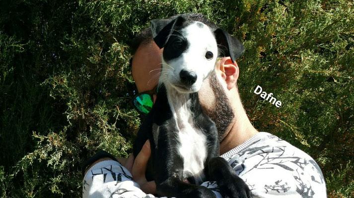DAFFNE (adoptée)