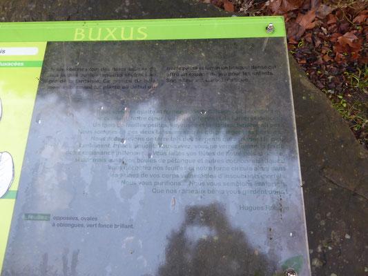 Doornik - het gedicht van Hugues Robaye viert de Buxus