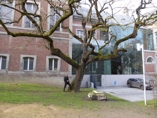 Doornik - in de tuin achter het Hôtel de Ville, de energielijn loop achter de lotusboom langs