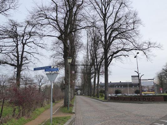 De Heyendallaan met lindebomen - de goudgele energielijn loopt links, aan de noordzijde op deze toegangslaan.