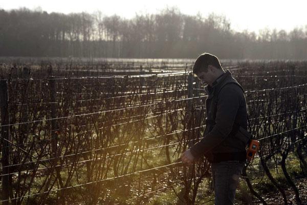 taille de la vigne domaine du croc du merle val de loire vin