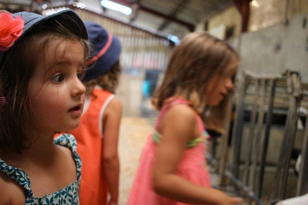 visite de ferme enfant adulte dégustation fromage produits laitiers vin
