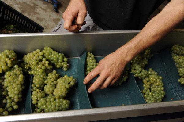 vinification domaine du croc du merle vin cheverny val de loire