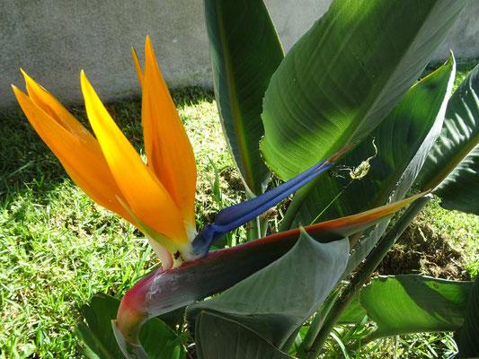 Pflanzenwelt Azoren