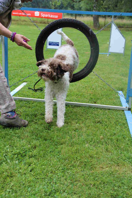 Sommerfest bei den Hundefreunden in Erbach