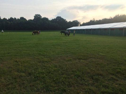 Arrivée des cavalières frnaçsies etd e leurs chevaux. Photo : Sophie Clémentz