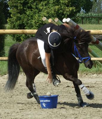 Photo FFCI : cheval islandais au poney games