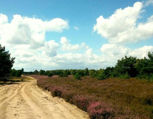 Kyritzer Heide, Foto von Hilde Grömping (von WanderLust)