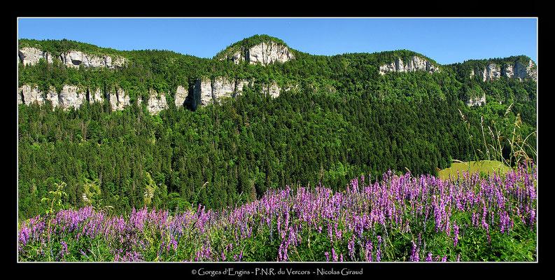 Gorge d'Engins- P.N.R. du Vercors © Nicolas GIRAUD