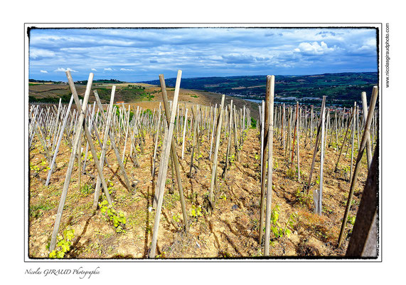 Vallée du Rhône - Ampuis © Nicolas GIRAUD