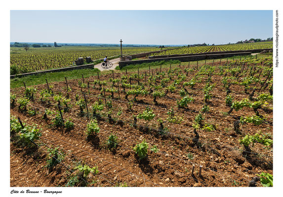 Côte de Beaune - Meursault © Nicolas GIRAUD