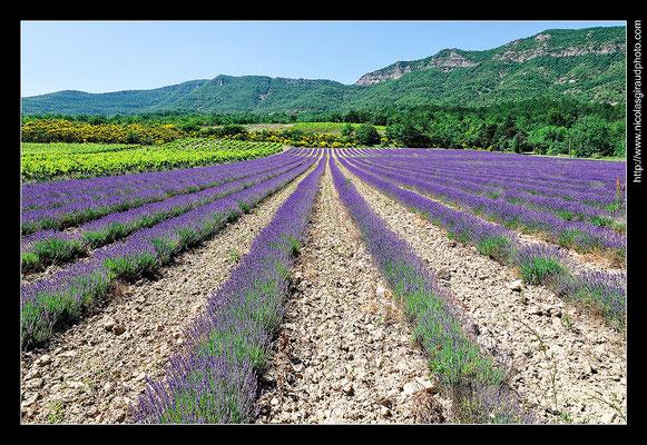 Souspierre - Drôme Provençale © Nicolas GIRAUD