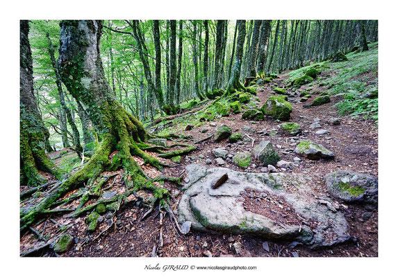 Col de pertus - Monts du Cantal © Nicolas GIRAUD