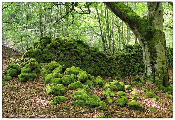 Cheire de Côme - P.N.R. des Monts Auvergne © Nicolas GIRAUD
