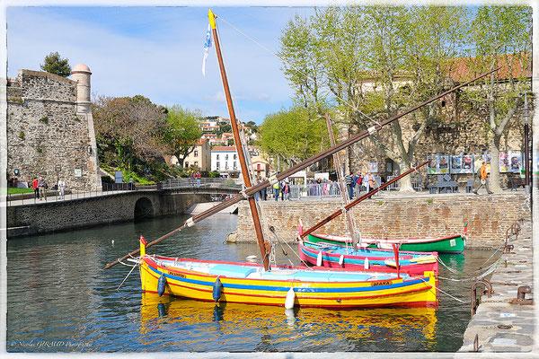Collioure - Côte Vermeille @ Nicolas GIRAUD