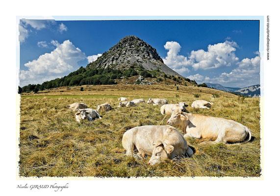 Mont Gerbier des Joncs - P.N.R. des Monts d'Ardèche © Nicolas GIRAUD