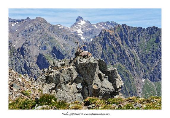 Bouquetin - Massif de Belledonne © Nicolas GIRAUD
