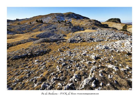 Réserve des Hauts plateaux - P.N.R. du Vercors © Nicolas GIRAUD