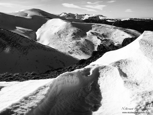 Adventif - P.N.R. des Volcans d'Auvergne © Nicolas GIRAUD