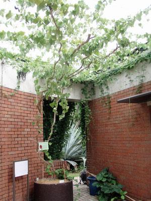 夢の島熱帯植物館(東京都) :2008年5月設置;ターンバックル(スパイラルワイヤー仕様)