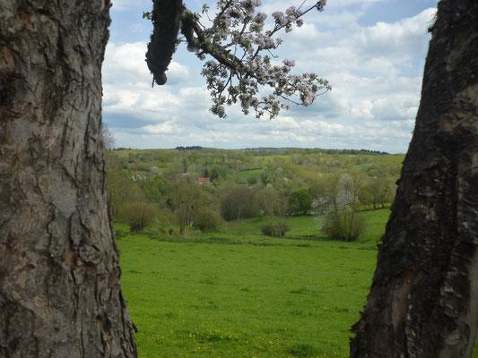 Paysage de bois et prairies depuis le jardin du gîte