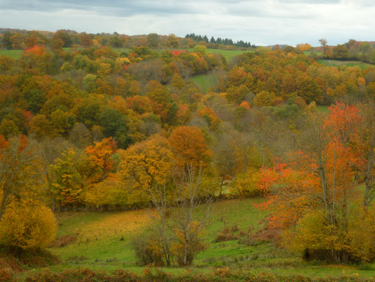 L'automne dans la vallée de la Tardes... magie des couleurs...