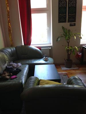 Hier hat sich Magali davongestohlen und es sich gemütlich im Zimmer meines Mitbewohners gemacht