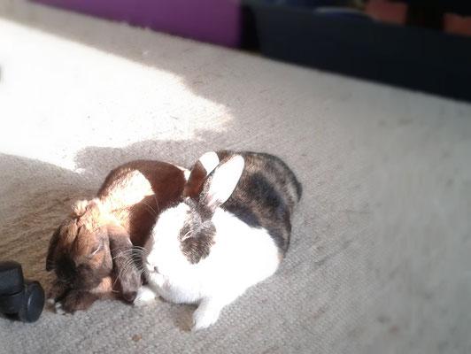 Mittagsschläfchen in der Sonne