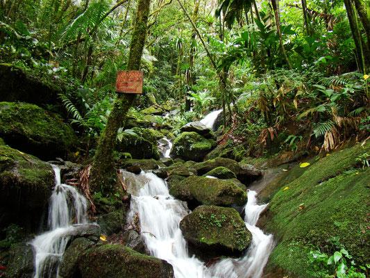 Quebrada San Lorenzo, Sector San Lorenzo - Sierra Nevada de Santa Marta