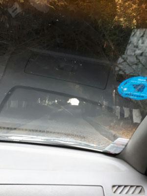Die Einfahrt zur Schule ist ein Tunnel aus Bäumen😍