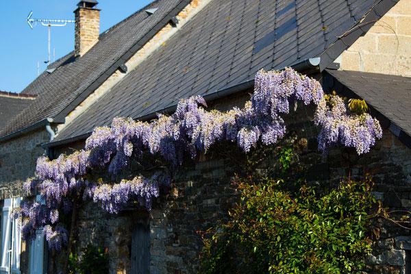 Blumenschmuck an einer Hausfassade in Portbail