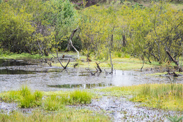 Kleiner Moorsee
