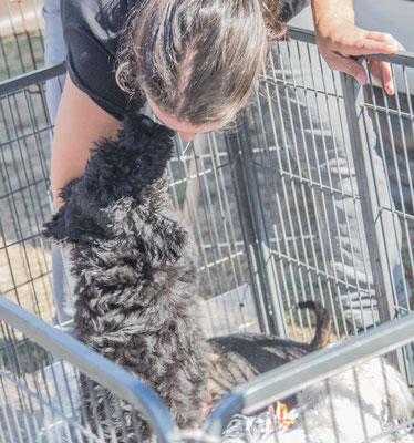 Die meisten Züchter kümmern sich liebevoll um die mitgebrachten Hunde.