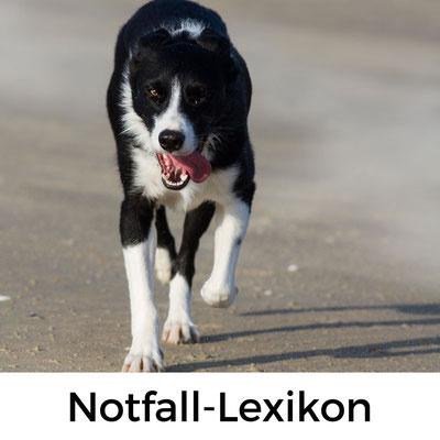 Notfall-Lexikon Französisch für Hundeurlauber in der Normandie
