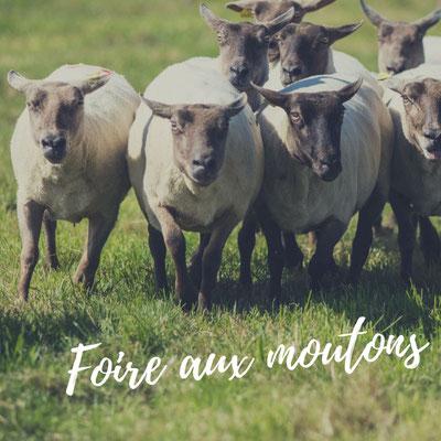 Foire aux moutons in Jobourg Cotentin Normandie