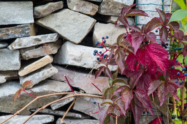 Wilder Wein rankt um die Steinmauern.