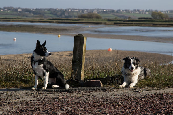 Das Städtchen und die Umgebung sind sehr gut zur Erkundung mit Hund geeignet