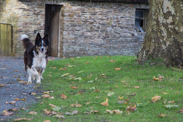Nette Hundebegegnungen inklusive :-)
