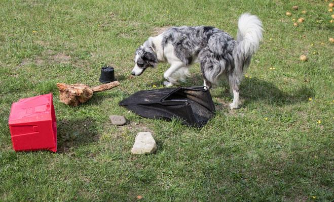 Der Pfeil ist im Trümmerfeld versteckt und Euer Hund findet ihn aufgrund des Geruchs wieder.