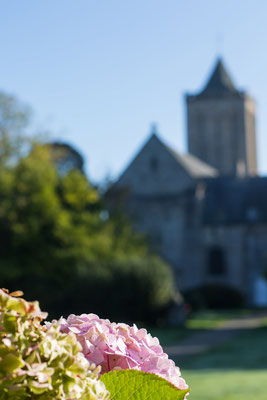 Auch im Oktober blühen im Klosterhof überall noch dieHortensien