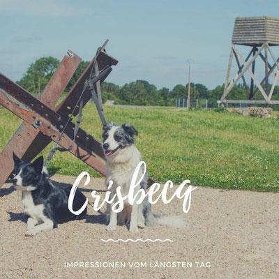 Batterie de Crisbeq mit Hund