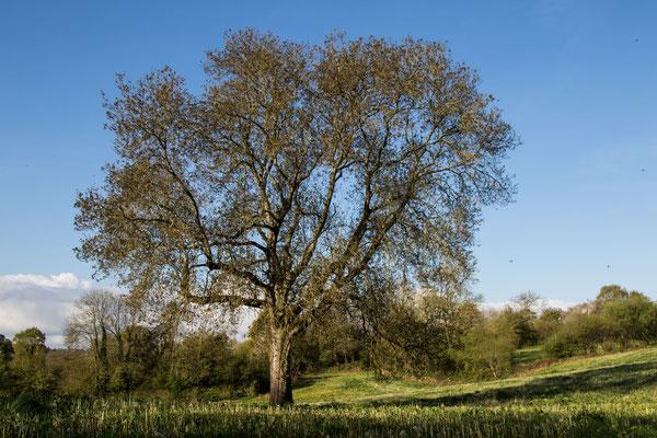 Natur pur auf dem Wanderweg rund um Feugères