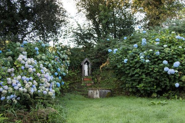 Rund um die Quelle blühen die Hortensien im September noch.