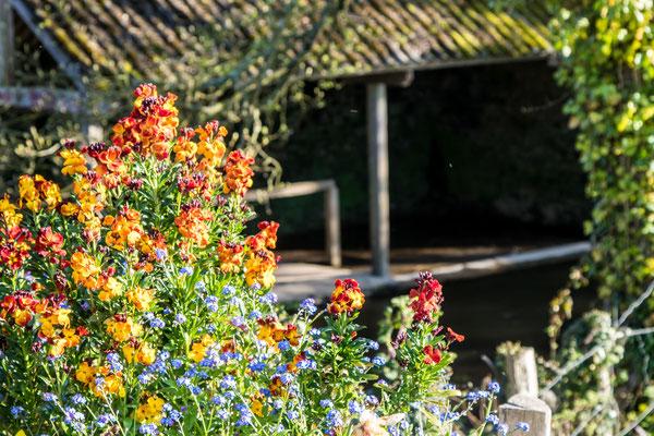 Blumenschmuck in Le Vast.
