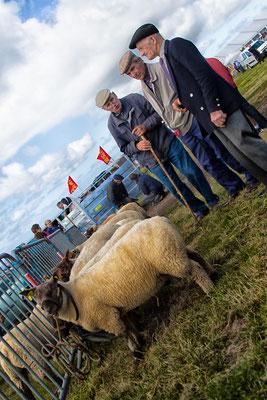 Sseit 1937 wird der Schafmarkt in Jobourg abgehalten, und man kann sich gut vorstellen, dass diese Schafzüchter von Anfang an dabei waren.