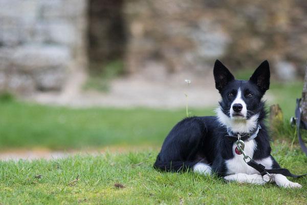 Das Château kann gut mit Hund an der Leine besichtigt werden
