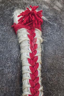 Auch ein schöner Rücken ... – Schweifschmuck an einem normannischen Percheron
