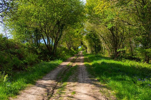 Weg zu den drei Mühlen durch typische Bocage-Landschaften