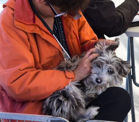 Eine Tierärztin überwacht den Gesundheitszustand der Welpen.