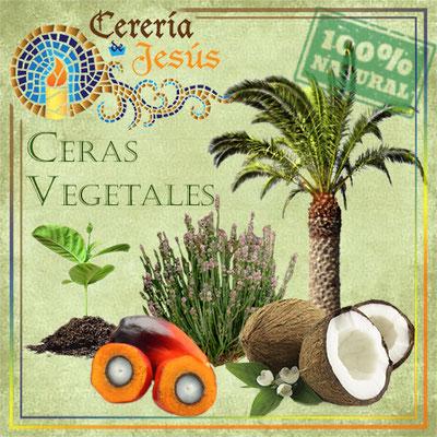 Ceras vegetales